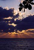 Relax Near The Jamaica Caribbean