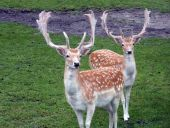 Look At Those Antlers
