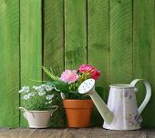 image of horticulture  - rustic still life watering can - JPG