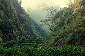 foto of shan  - Tea plantation in Fujian Province - JPG