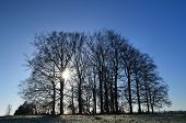 Winters Morning in England