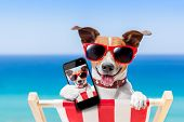 stock photo of shot glasses  - dog taking a selfie in summer holidays - JPG