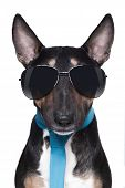 Cool Bull Terrier Dog