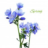Blue Watercolor Flowers, Vector Illustration