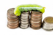 Green Caterpillar Climbing On Thai Coins, Money Concept.