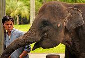 Mahout And Elephant At The Elephant Safari Park, Bali