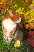 Cat  In A Yellow Leaves
