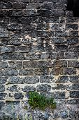 Brick Masonry With Green Dandelion Leaves Underneath