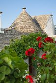 Trulli, The Typical Old Houses In Alberobello.