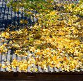 Autumn leaves on roof