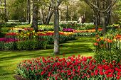 image of early spring  - Colorful spring flowers in park on early morning in april - JPG