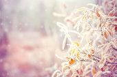 Winter Background with snow branches tree leaves and snowflakes on background