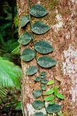 Cape Tribulation Rainforest, Australia