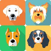 stock photo of american staffordshire terrier  - Set icon flat design dogs different breed - JPG