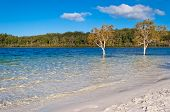 stock photo of mckenzie  - Lake McKenzie Fraser Island - JPG