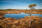 Swamp In April