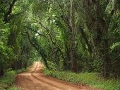 Red Clay Canopied Country Road