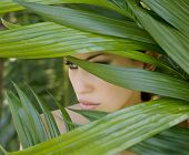 picture of panther  - Sexy beautiful woman hiding behind the palm leaves like a panther in the in the tropical forest in India - JPG