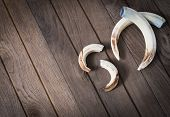 stock photo of boar  - Boar tusks  - JPG