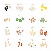pic of sunflower-seeds  - Plant seed icon flat set with pumpkin corn wheat   sunflower  isolated vector illustration - JPG