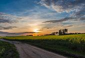 stock photo of rape-field  - beautiful sunset on a country road near Minsk Belarus with blue sky and yellow rape field - JPG