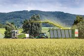 foto of whole-grain  - Forage harvester with chopped material transporter during harvesting of grain as whole crop silage for biogas production  - JPG