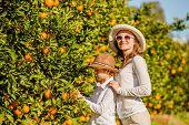stock photo of mandarin orange  - Smiling happy mother and son harvesting oranges and mandarins at citrus farm - JPG