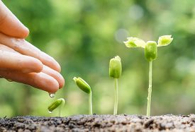 stock photo of germination  - hand nurturing and watering young baby plants growing in germination sequence on fertile soil with natural green background - JPG