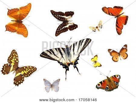 Постер, плакат: группы бабочек изолированные, холст на подрамнике