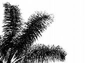 Silhouette Palm Tree And Leaves