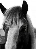 Black And White Horses Head
