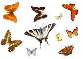 Постер, плакат: группы бабочек изолированные