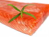 Freah salmon steak