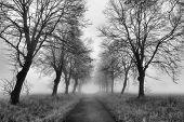 Magic path with a misty fog