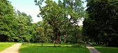 Rus - Around Seven Hundred Years Old Oak Tree At Rogalin Village Palace Monumental Oaks Park. Poland poster