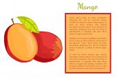 Mango Exotic Juicy Stone Fruit Whole And Cut Poster Frame For Text. Tropical Edible Food, Dieting Ve poster