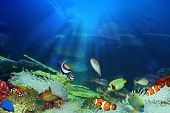 image of school fish  - Fish in the sea - JPG