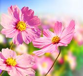 pic of beautiful flower  - Beautiful flowers in the morning - JPG
