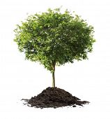 picture of planting trees  - plant tree - JPG
