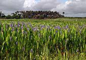 Pickerel Spring
