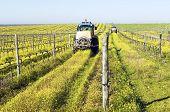 Tractores rociando la Viña
