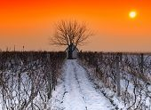 Vineyard Farmhouse