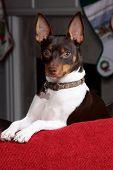 Terrier Headshot