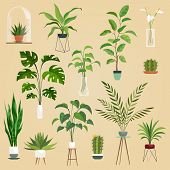Plants In Pots. Houseplant, Succulent Plants. Ficus Planting In Flowerpots Vector Isolated Set. poster