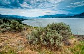 Okanagan Lake Near Naramata View With Brush