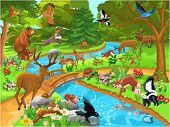 stock photo of skunks  - forest animals coming to drink water - JPG