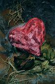 Closeup eines blutigen Herzens ein trockener rose auf eine trostlose Landschaft