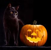 stock photo of creepy  - Halloween pumpkin and black cat scary spooky and creepy horror holiday superstition evil animal and jack lantern - JPG