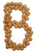 Ginger Nut Alphabet B
