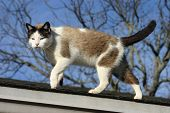 Cat Walking On Roof